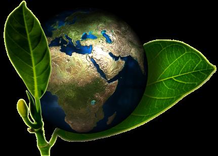 Cosmétiques minimalistes et écologiques - Sapo Sapo
